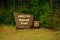 Angelina National Forest in Texas 1-10-2015 DSC_0501