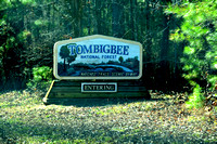 Tomigbee National Forest, MS 1-5-2015 DSC_0191