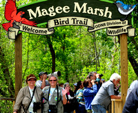 Magee Marsh Wildlife area, OH West end (Karen & Rita)