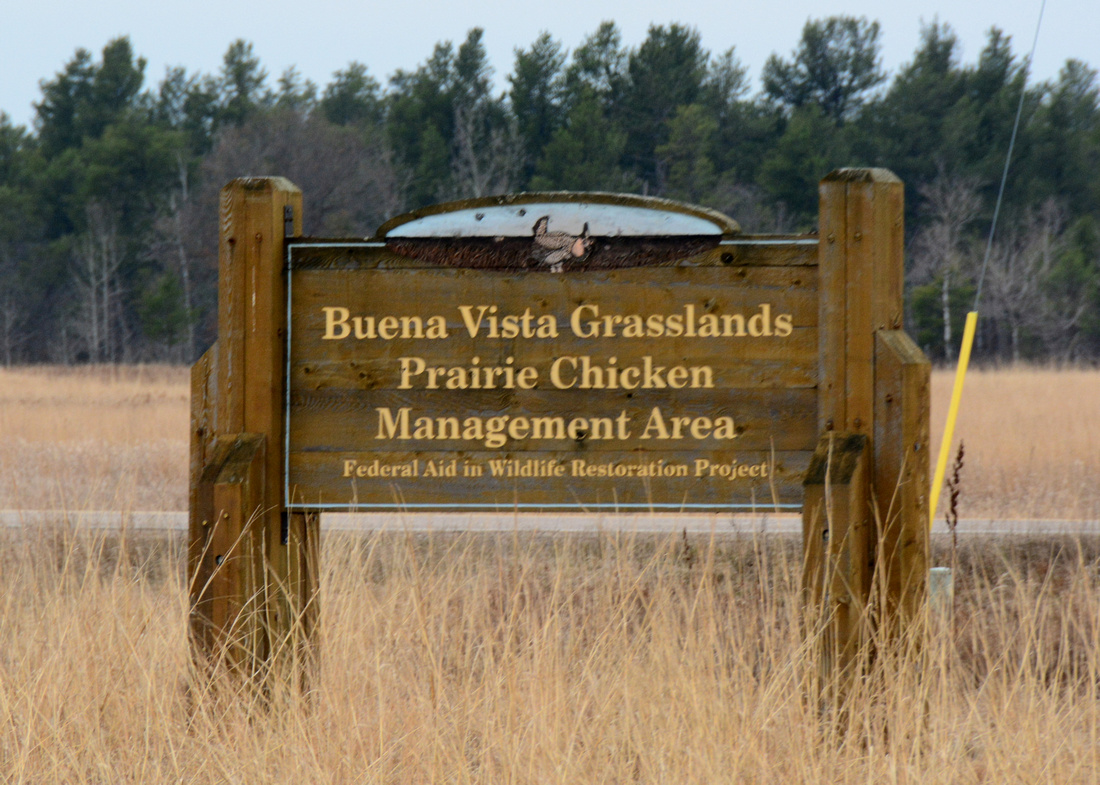 Greater Prairie Chicken Site in Wisconsin